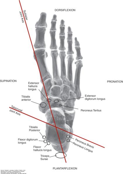 subtalar joint axis